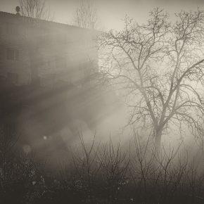 M_W50_MORNING INTO FOG - Siena2019 - Christian Brogi - Italy