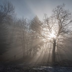M_W50_Shining bright - Xan White - Switzerland