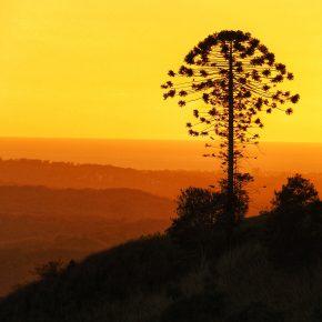M_W50_Sunrise Silhouette - Julie-Anne Campbell - Australia