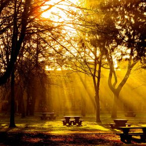 S_W30_Morning glory - Mariola Yakoobeck - Canada